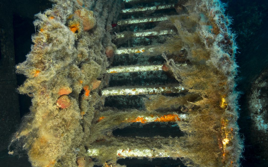 Why We Love Diving on the Zenobia