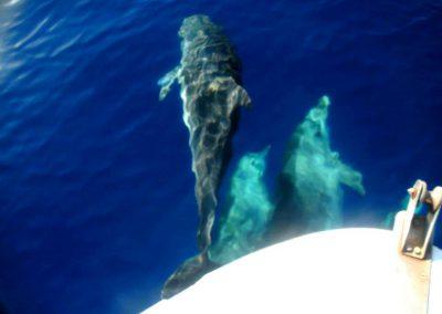 dolphins, sea, boat, Akrotiri