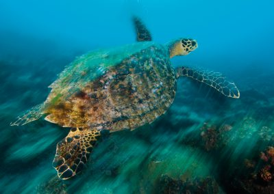 turtle, Crest Dive, cyprus, sea, diving, beautiful